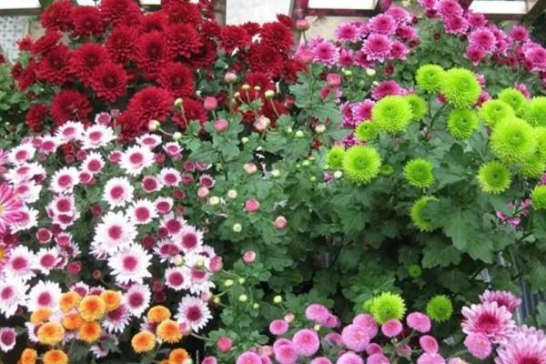 大门口养的花,邻居却说不吉利,只好拔个精光!