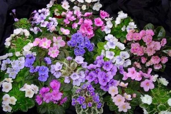 耐阴花就选它,占地小开花多,摆在家里很精致!