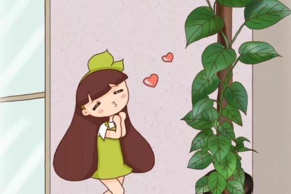 绿萝绑在柱子上,4个月蹿到2米高,一片叶子比脸大,咋养的?