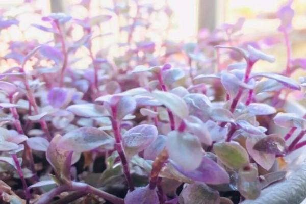 比绿萝好看100倍的花,掐个枝3天就生根,越养越上瘾!