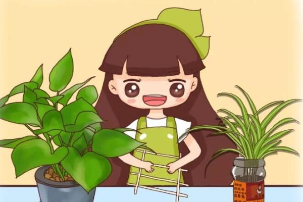 旧筷子、老干妈瓶别扔,拿来养花有大用处!