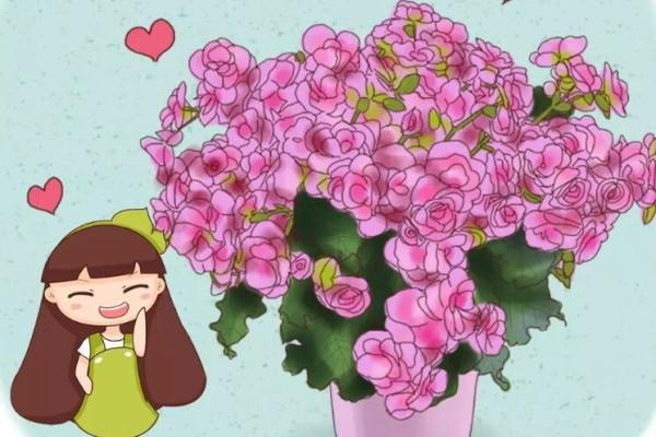 7种转运花,家里赶紧养一盆,开花就是好兆头