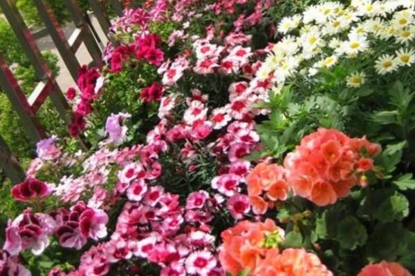 防盗窗养这5盆花,开花多、花期长,邻居看了都眼红!