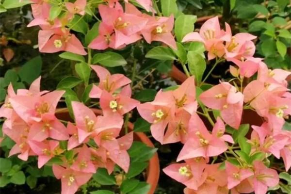 家里养花,改掉5个坏习惯,啥花都能养爆盆!