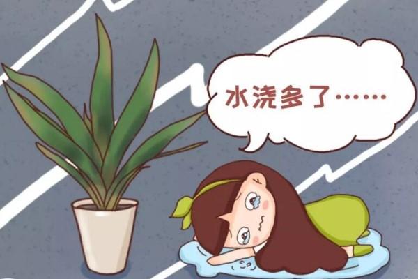 8种花秋冬要穷养,千万别乱浇水,一浇就烂根!