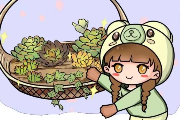 家里的菜篮子别扔,拿来养花,大有用处!