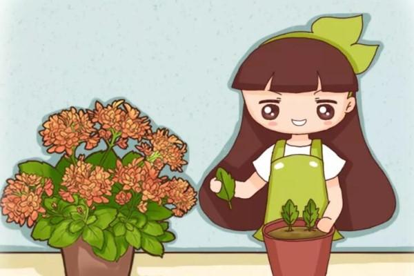 这5种花不用买了,蹭掉的叶子塞盆里,立马又冒一大盆!
