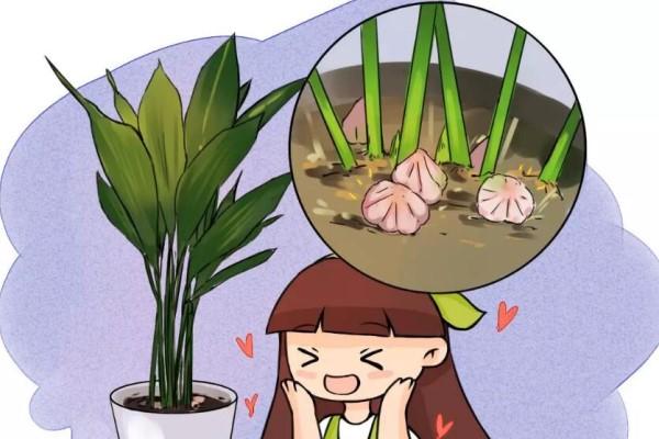 平时丑到没人看的花,一开花就惊艳,全小区都来围观!