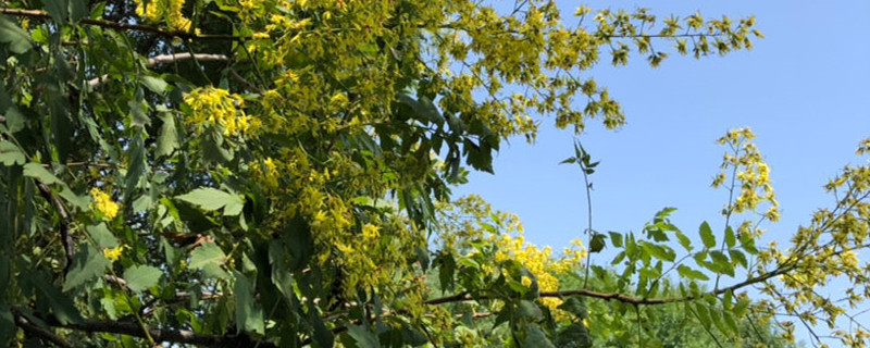 绿化树苗的病虫害防治