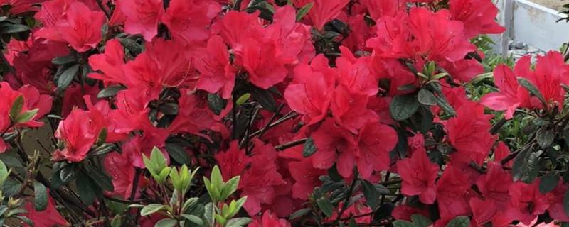 家里养花用什么杀虫剂