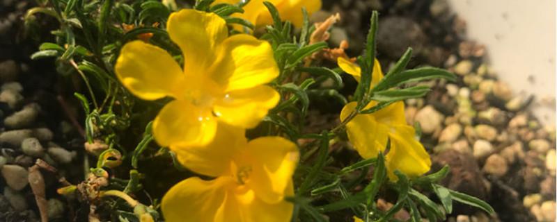 树地里的土可以养花吗