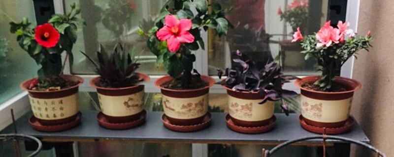 养花巧用西瓜皮制液肥