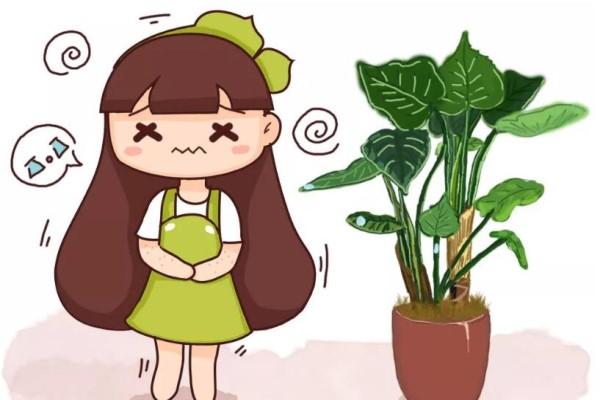 3种花,冬天不能乱浇水,一浇多就黄叶, 旱一旱才能长得旺!