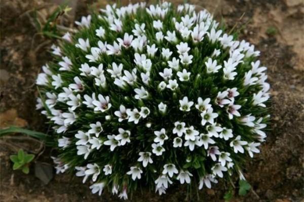 15种小众花,比长寿月季都好看,你能叫出名字吗?