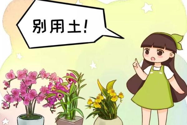 这4种花不能用土养,一浇水就烂根,赶紧换!