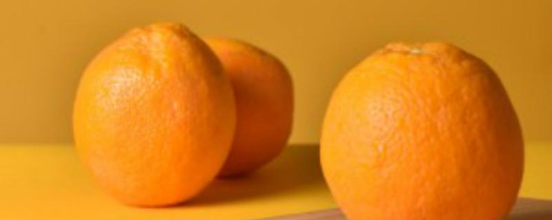 耐寒橙子树品种