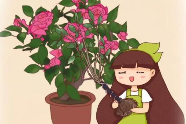 5种花,冬天千万别换盆,小心一换就死!