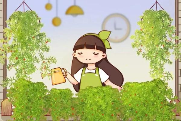 比文竹好养的武竹,沾点土就活,1个月长成2米绿帘子!