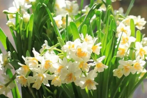 这花冻一冻,立马发芽开花,满屋子都是香味!