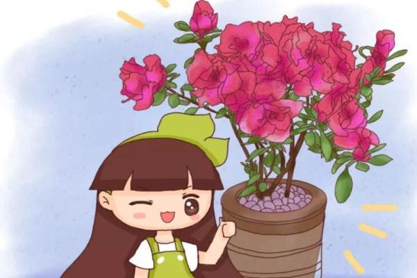 养这花,盆越小花越多,放大盆里容易死!