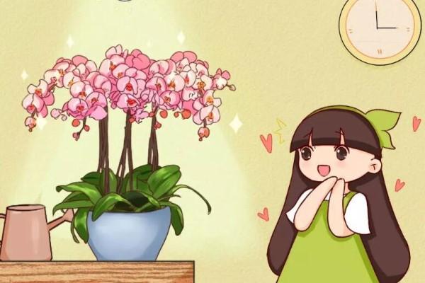 """冬天养盆""""吉祥兰"""",富贵又大气,开花满屋子飘香!"""