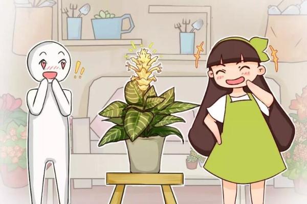 有品味的人,都爱养这花,大气上档次,养10盆都不嫌多!