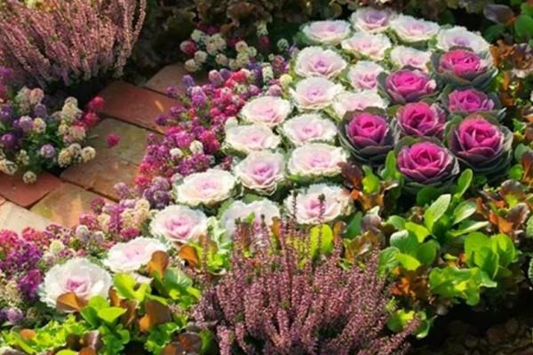 零下15度,院子里的花全死了,就剩它还活着!