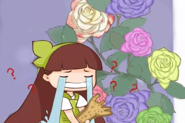千万别买这种花,全都是假货,谁买谁吃亏!