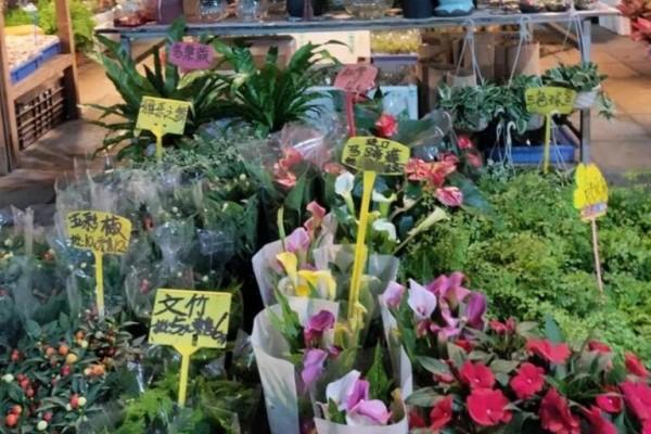 12月逛花市,这花最好看、最好养,遇到赶紧抱回家!