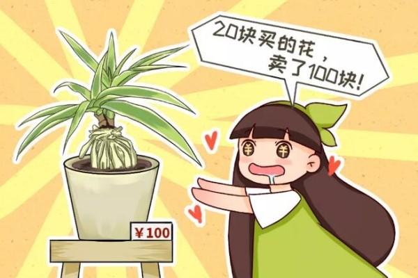 这4种花,把根拎出来养一年,身价立马翻倍涨!