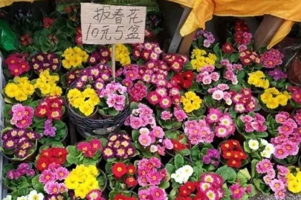 耐半阴的小草花,从冬一直开到春,花市10元5盆!