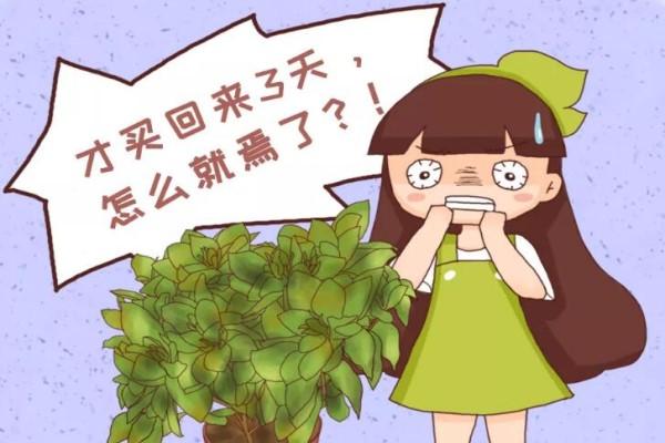12月逛花市,千万别买这花,养不活还浪费钱!