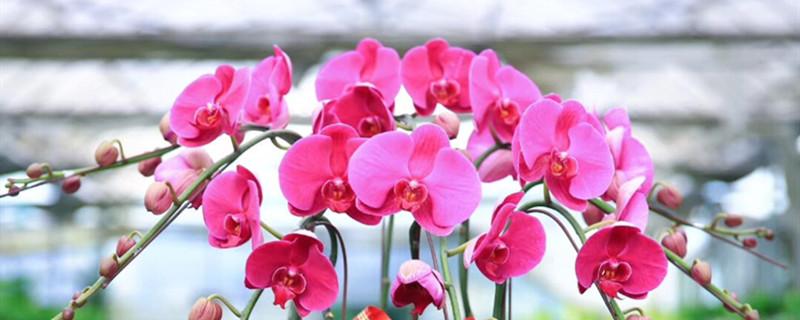 蝴蝶花适合在什么地方养殖