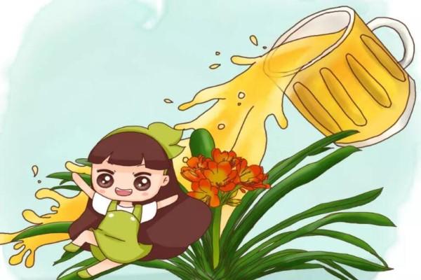 给花浇点救命水,3天黄叶变绿叶,呼呼开出满盆花!