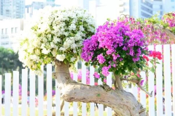 这6种花现在养,一个月后就开花,红红火火旺家宅!