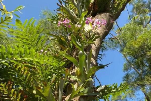 特神奇的花,绑在木头上也能活,一根枝能开20朵花,头一回见!