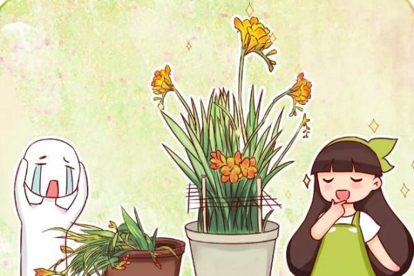 家里有这花,叶子东倒西歪,再不管小心没花看!