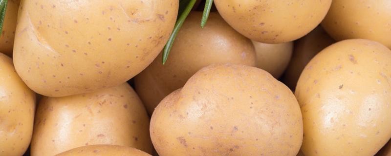 马铃薯为什么是茎不是根