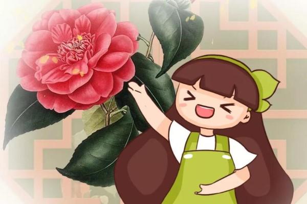 这4种花要开了,千万别挪地儿,不然花苞哗哗掉!