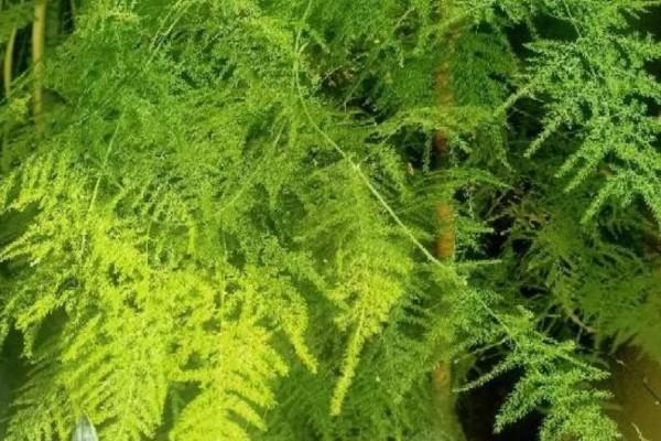 最适合冬天养的花,养一盆杀菌去异味,空气清新身体好!