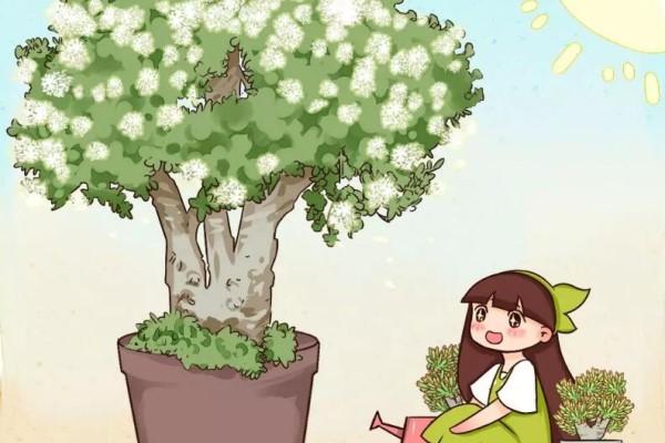 20年的玉树长疯了,砍1刀、杆子比大腿还粗,开花1000朵!