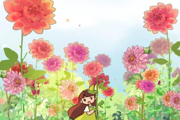 这花就是开花机器,连开6个月不歇气,真怕把它累死!