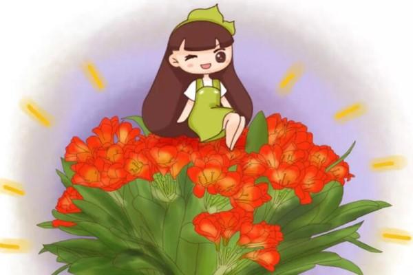 大爷专养君子兰,1盆窜出8个花箭,叶子壮得像大白菜!
