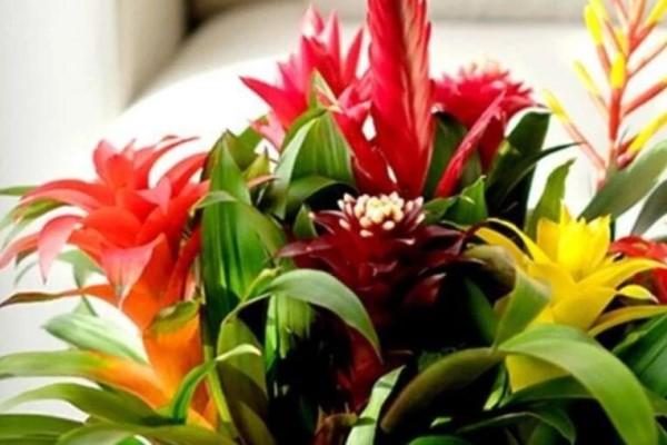 冬天养这花,撒点水就活,开花10个月不败!