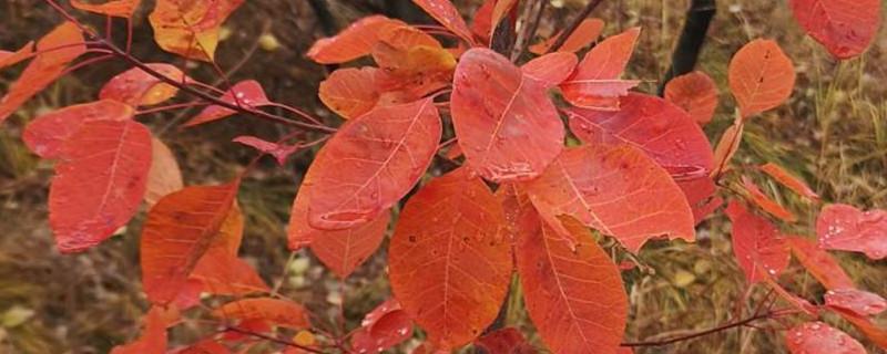 毕棚沟11月还有红叶吗