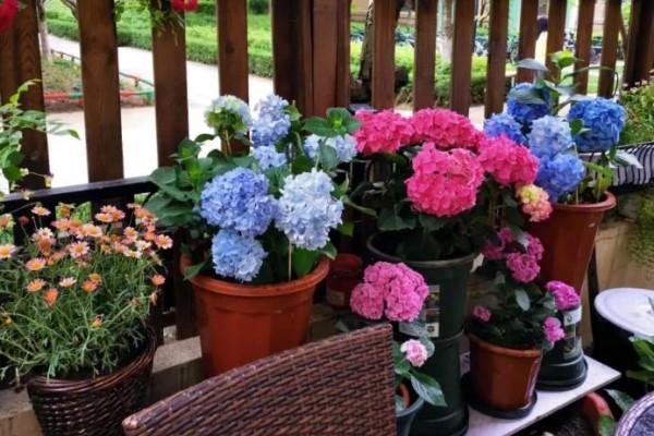 冬天最冷的东北,院子里养满花,她真的做到了!