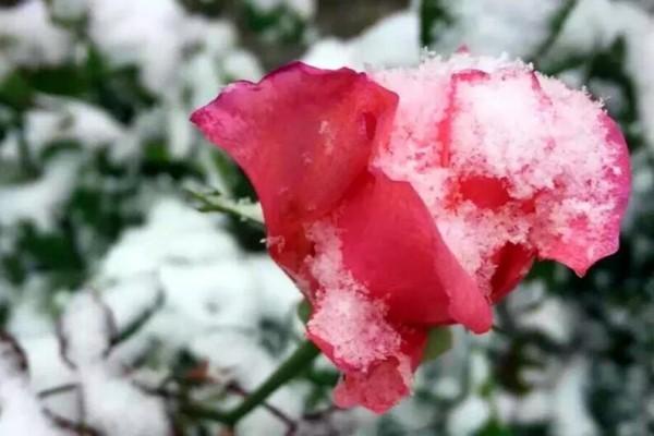 冬天养这3种花,开花就是不要命,剪掉才能活下去!