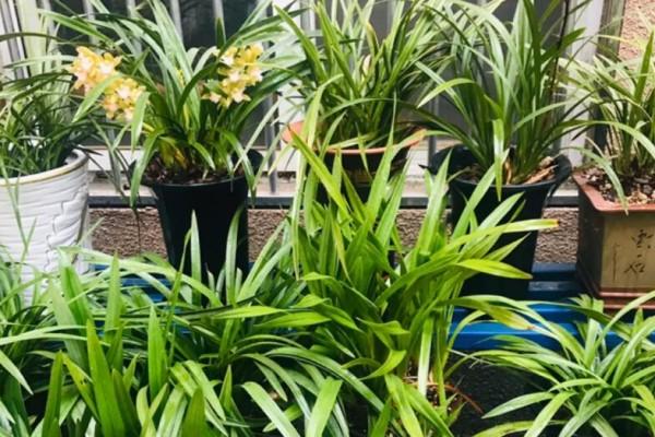 养这花不用土,装进塑料袋喷喷水,竟然越长越好!