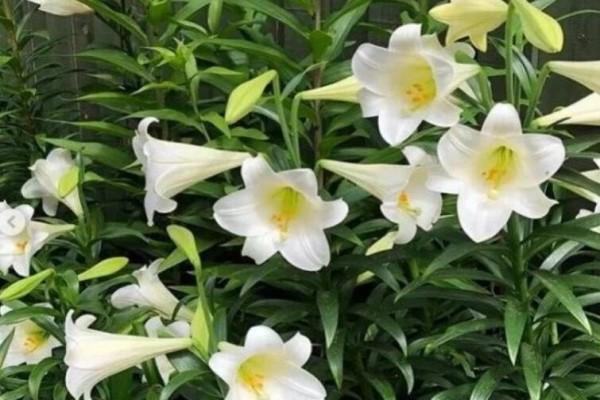 12星座的守护花,每个人都有,你的是哪个?