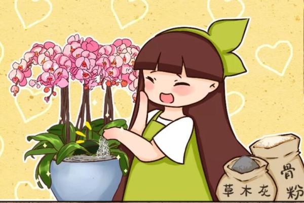 给花撒点粉末,不招虫不黄叶,2个月狂开花!